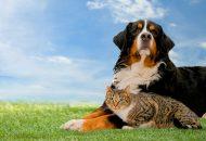 De unde cumparam mancare pentru cainele sau pisicuta noastra? Viziteaza un pet shop online cu produse de calitate!