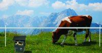 De ce gardul electric reprezinta cea mai eficienta  metoda de protectie a unei ferme?