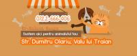 Vizita la cabinet veterinar Valu solutia perfecta pentru sanatatea animalutului tau de companie