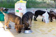 Hill's România sponsorizează 13 adăposturi de animale cu echivalentul a 200.000 de mese pentru câini și 500.000 de mese pentru pisici