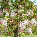 Adevărul despre grădinărit cu GrădinaMax - 7 sfaturi ce îți vor pregăti grădina pentru sezonul cald