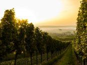 BITSoftware - soluții software pentru sectorul vitivinicol cu finanțare europeană