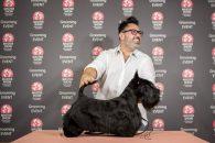 Cele mai importante evenimente de pet grooming se desfășoară la PetExpo 2019, între 12 și 14 aprilie, la Romexpo