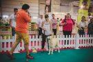 10 evenimente pentru animale de companie au loc în Arena PetExpo