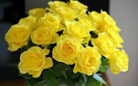 5 motive pentru care ar trebui sa oferi mai des buchete de trandafiri galbeni