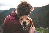 Ingrijirea unui caine adoptat - Sfaturi pentru o adoptie de succes